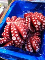 tako (octopus)